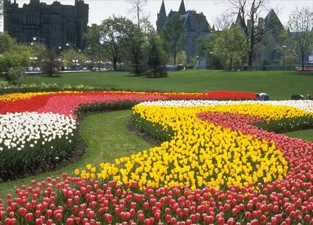 Mevsimlik çiçekler mevsimlik çiçekler mevsimlik çiçekler